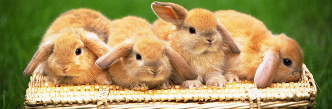 30+ Free Heartwarming Rabbit Wallpapers