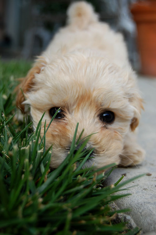 Lovely Hello Puppy Photo