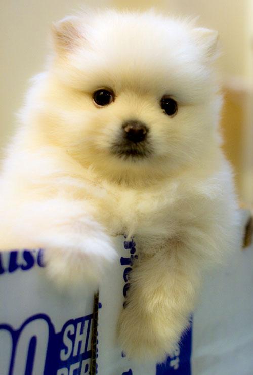 heart melting puppy photo