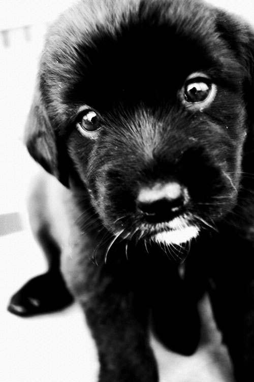 adorable black puppy photo