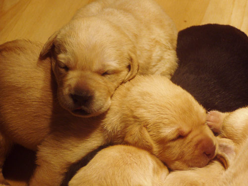 Cuddly Newest Puppies