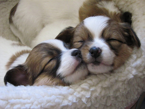 good sleepy puppies photo
