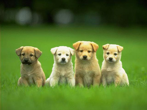 Cute Puppies in Photo