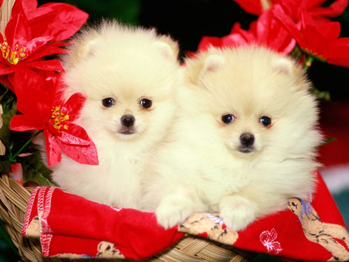 Cutest Puppies Planet