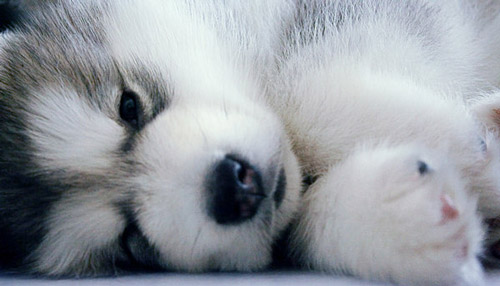 amazingly cute winky puppy