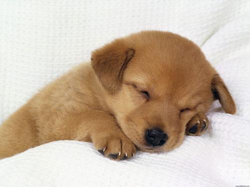 heartwarming puppy photo
