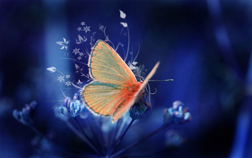 Soothing Butterfly Wallpaper