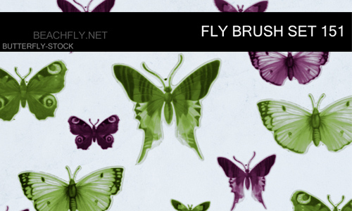 Butterfly Stock-Brush Set 151