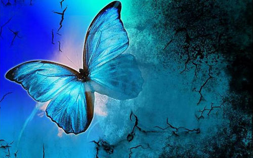 Very Nice Butterfly Wallpaper