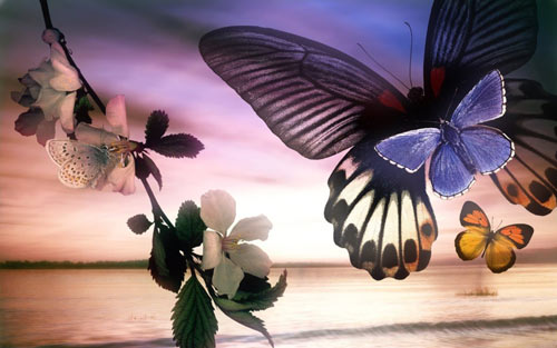 Flutter Like Butterflies Wallpaper