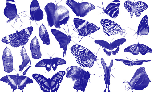 25 butterfly Photoshop brush