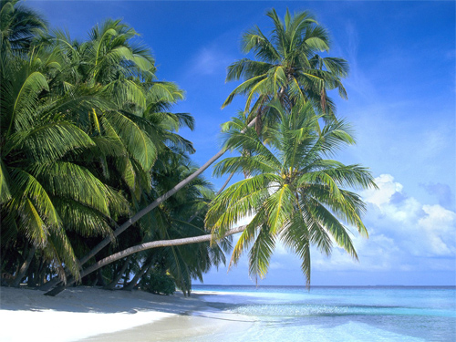 Palm Paradise, Maldive Islands
