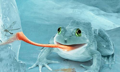 Alluring Snow Frog