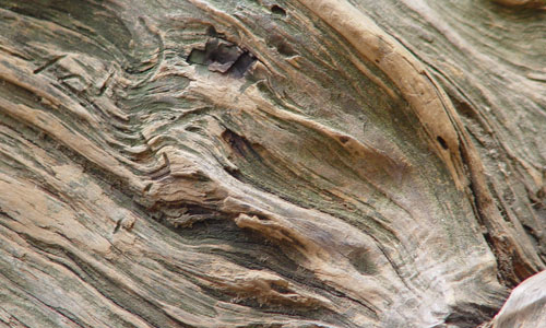 Cool Detailed Wood Texture