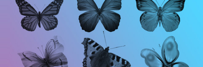 A Collection of Free Butterfly Photoshop Brushes