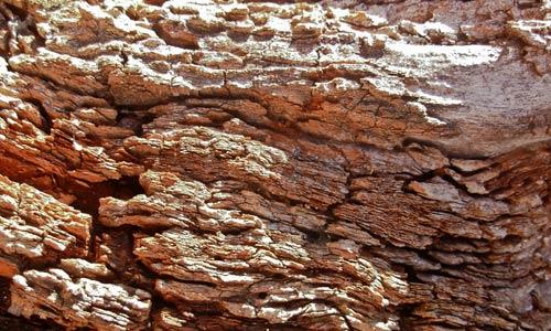 At Glow Bark Texture