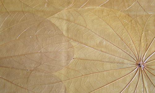 Elegant Leaf Veins Texture
