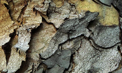 Very Good Bark Texture