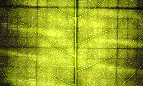 Eye-Catching Leaf Texture