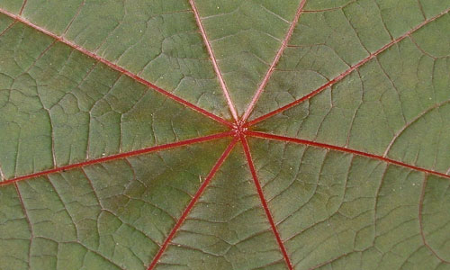 Perfectly Amazing Leaf Texture