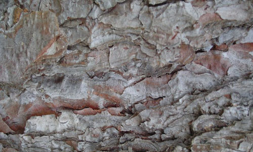 Fit For Style Bark Texture