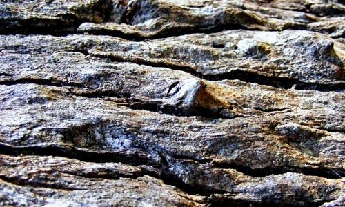 Cool Bark Texture