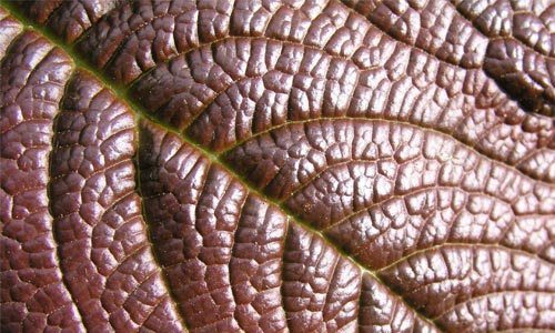 Really Appealing Leaf Texture