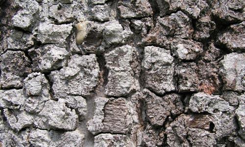 Excellent Bark Texture