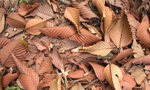 Amazing Dead Leaves Texture