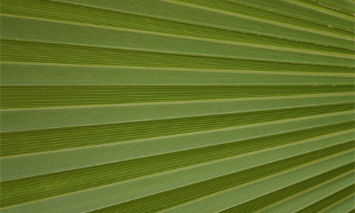 Purely Green Leaf Texture