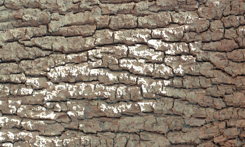 Roughly Amazing Bark Texture