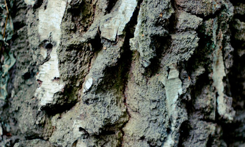 Theme-Perfect Bark in Chunks Texture