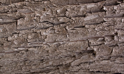 Really Good Bark Texture