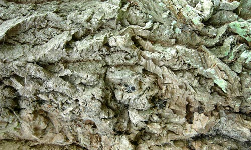 Perfectly In Detail Chunky Bark Texture
