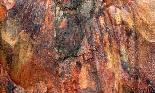 Inviting Bark Texture