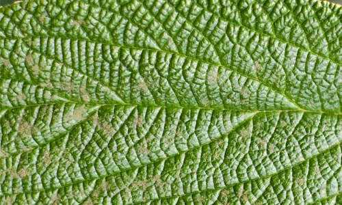 Absolutely Amazing Leaf Texture