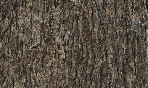 seamless bark texture