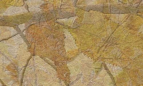 Appealing Pressed Leaves texture