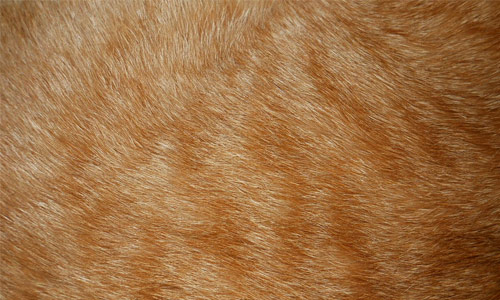 Amazing Fur Texture