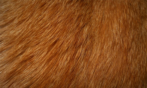 Behaved Cat Fur Texture