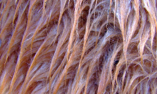 Fresh Fur Texture