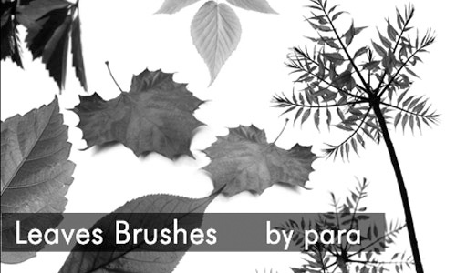 Simpler but Very Nice Leaf Brush Set