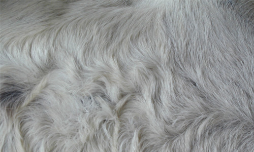 Relaxing Donkey Fur Texture