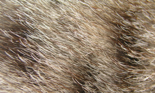 Fine and Nice Fur Texture