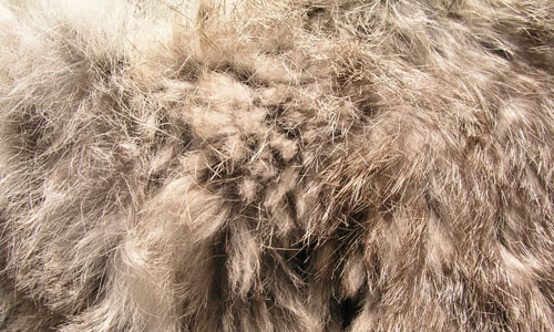 Amazing Rabbit Fur Texture