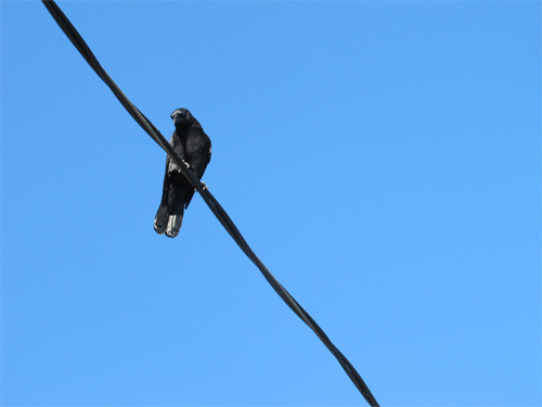 one crow