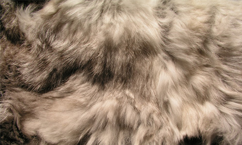 More Fluffy Rabbit Fur Texture