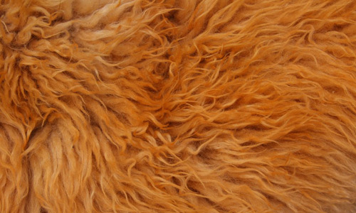 Attractively Nice Fur Texture