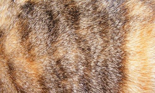 Eye-Revealing Fur Texture