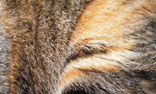 Simply Impressive Fur Texture